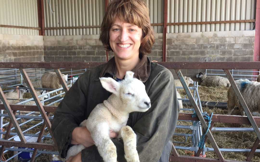 Free lambing open day at Croots Farm Shop in Derbyshire on Sunday 28th April