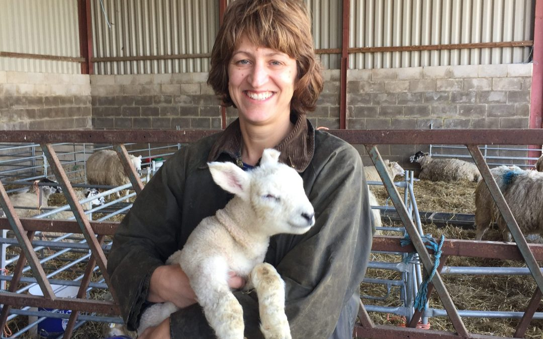 Free lambing open day at Croots Farm Shop in Derbyshire