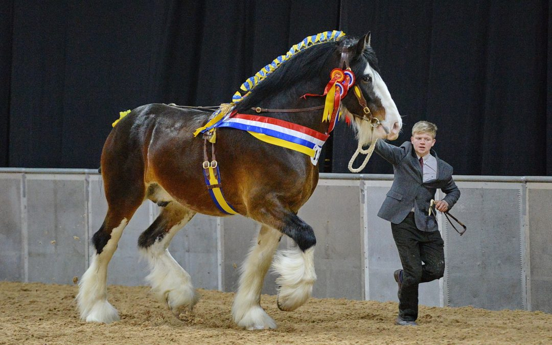 Date announced for the 2019 National Shire Horse Show